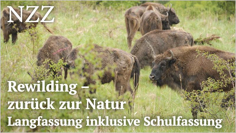 Rewilding - zur�ck zur Natur - Langfassung inklusive Schulfassung