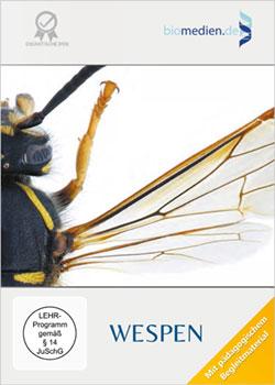 Wespen - Ein Unterrichtsmedium auf DVD