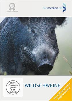 Wildschweine - Ein Unterrichtsmedium auf DVD