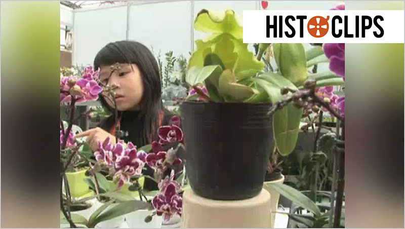 Orchideenzucht in Taiwan