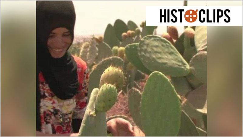 Marokko: Fl�ssiges Gold aus Kakteen