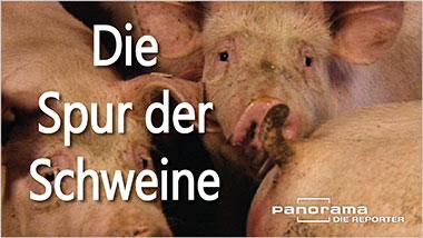 Die Spur der Schweine - Ein Unterrichtsmedium auf DVD
