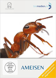 Ameisen - Ein Unterrichtsmedium auf DVD