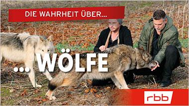 Die Wahrheit über Wölfe - Ein Unterrichtsmedium auf DVD